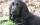 Garde d'animaux à Limeil-Brévannes